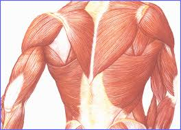 Herbal remedy for lower back pain helps to give relief from lower backache
